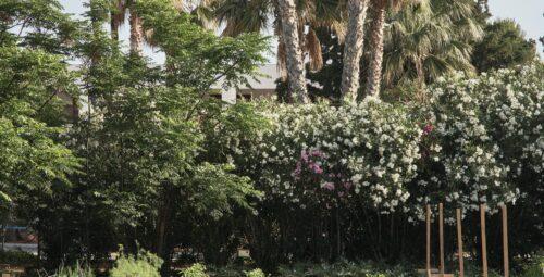 345 – Organic Kitchen Garden