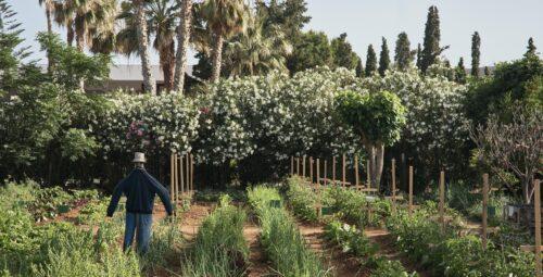 346 – Organic Kitchen Garden