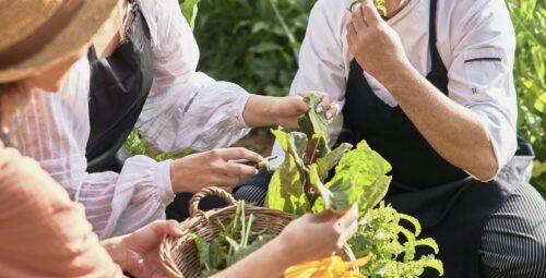 347 – Organic Kitchen Garden