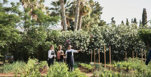 350 – Organic Kitchen Garden